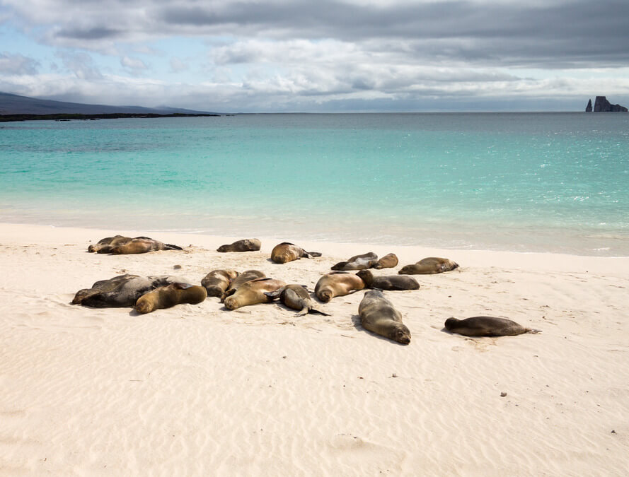 ten-reasons-visit-travel-south-america-wildlife-animals-galapagos-seal