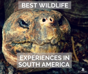 Best-wildlife-experiences-in-South-America