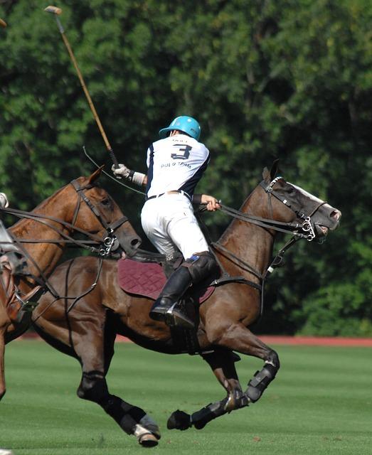 Boutique South America Argentina Polo Horse