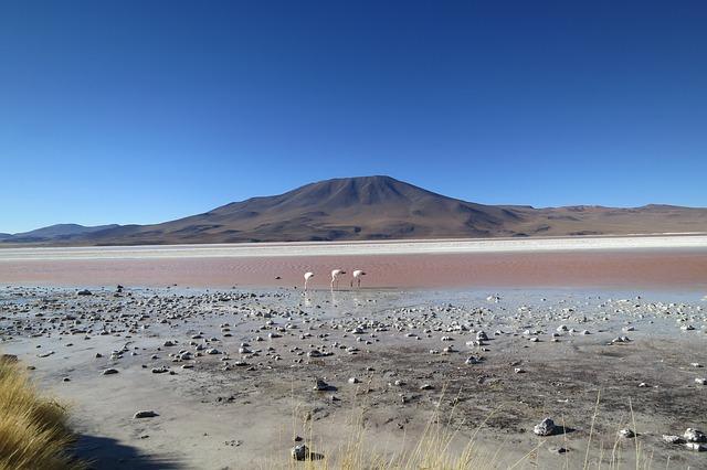 Boutique South America Chile Desert Flamingo