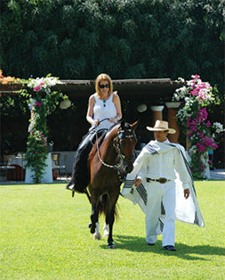 Boutique South America Peru paso Horse
