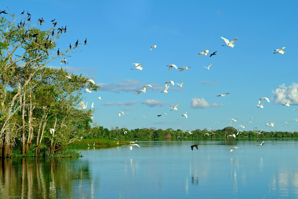 Amazonian Birds Flying