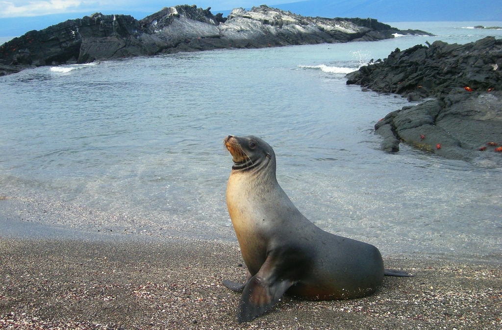Boutique South America Galapagos photograh sea lion