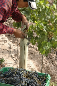 mendoza-argentina-wine-travel-harvest