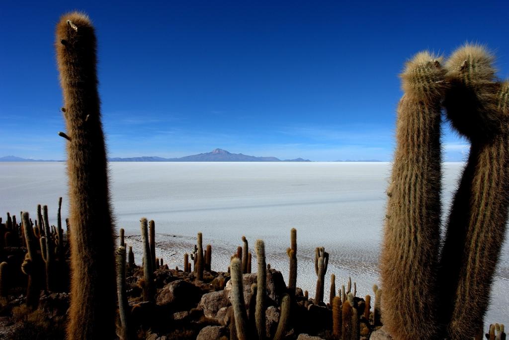bolvian-salt-flats-uyuni-incahuasi-island-cactus
