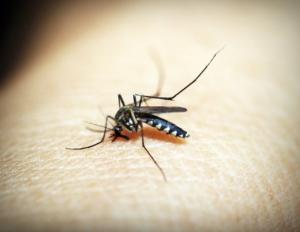 south-america-travel-vaccination-mosquito-zika-yellow-fever-dengue