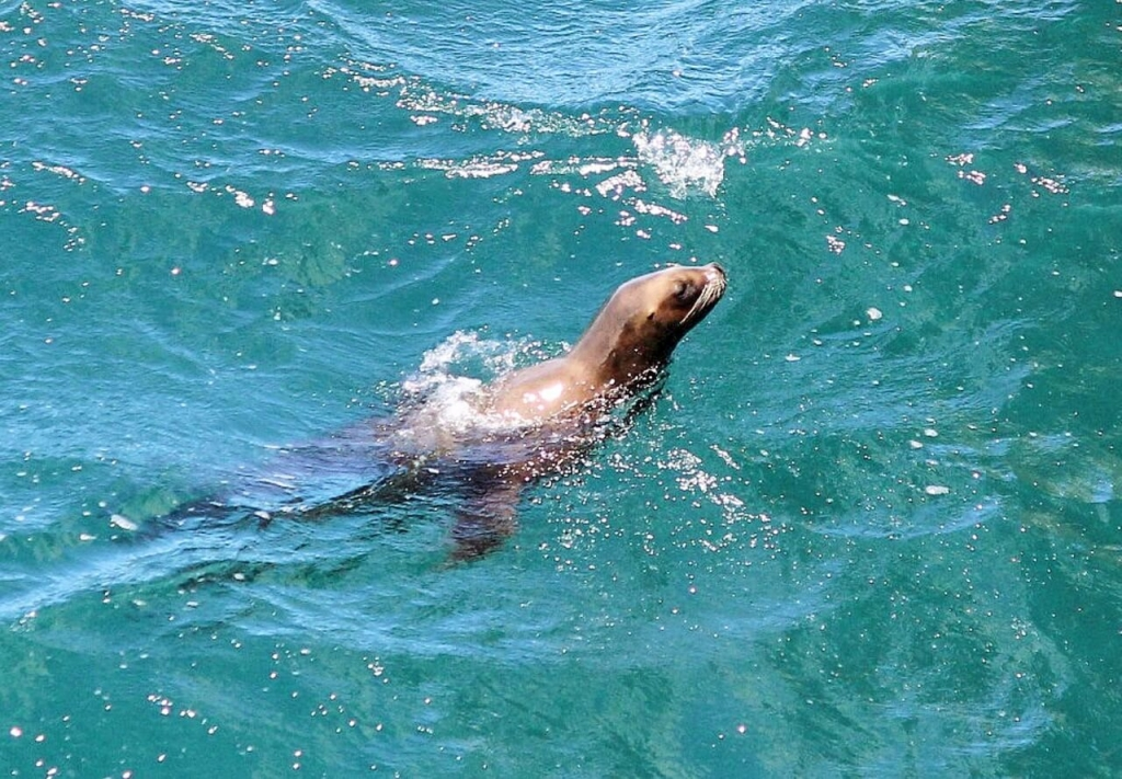 patagonia-tours-adventure-sea-lion-puerto-madryn