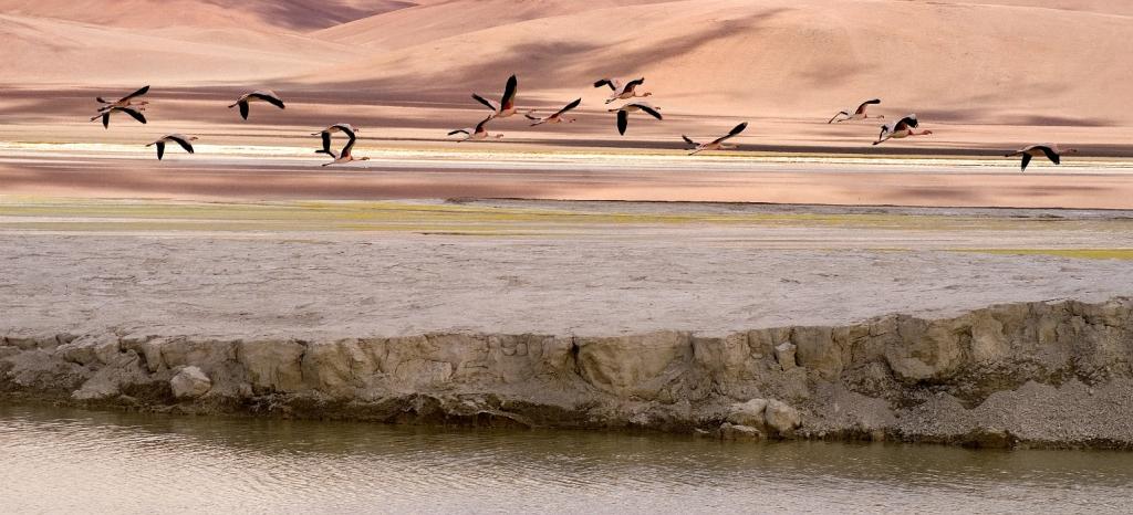 atacama-desert-pics-photography-dream-salar-flamingo